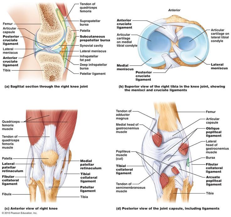 Bone structure of knee joint-femur
